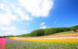 花粉症北海道