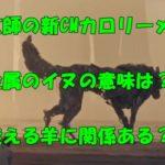 米津玄師 CM 金属のイヌ オオカミ 意味 カロリーメイト